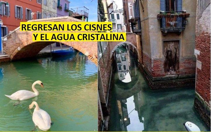 Italia sin humanos y el agua en los canales de Venecia se vuelve cristalina en medio del bloqueo