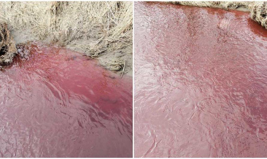 'Esto parece bíblico': Un arroyo en Canadá se puso rojo como la sangre (VIDEO)