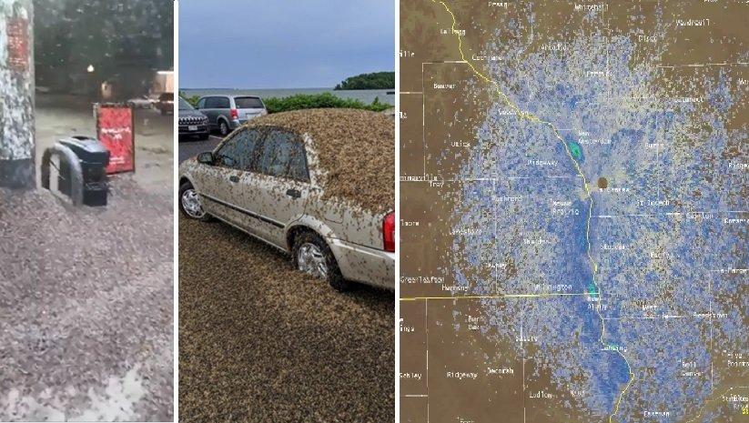 Enjambre de moscas en Iowa