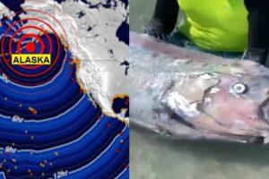 Pez remo Terremoto Alaska
