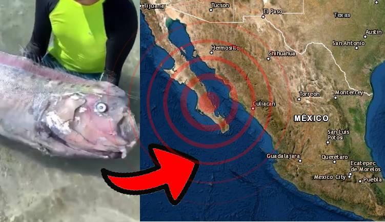 Pez remo en México, Baja California.