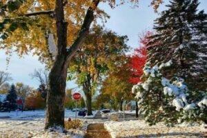 El otoño cambió al invierno en cuatro horas en Minneapolis