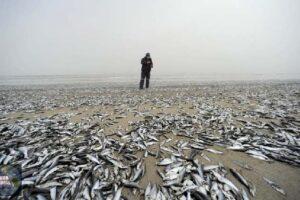 Misteriosa aparición de toneladas de peces muertos en la costa central de Chile