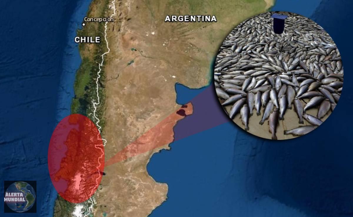 Catástrofe ambiental en Chile por la aparición misteriosa de 5 mil toneladas de peces muertos