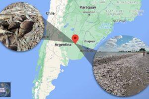 Inusual suceso en Argentina aparecen miles de peces muertos en una laguna de Buenos Aires