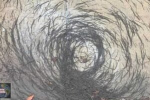 Los científicos desconcertados por un extraño 'Tornado de GUSANOS en Nueva Jersey