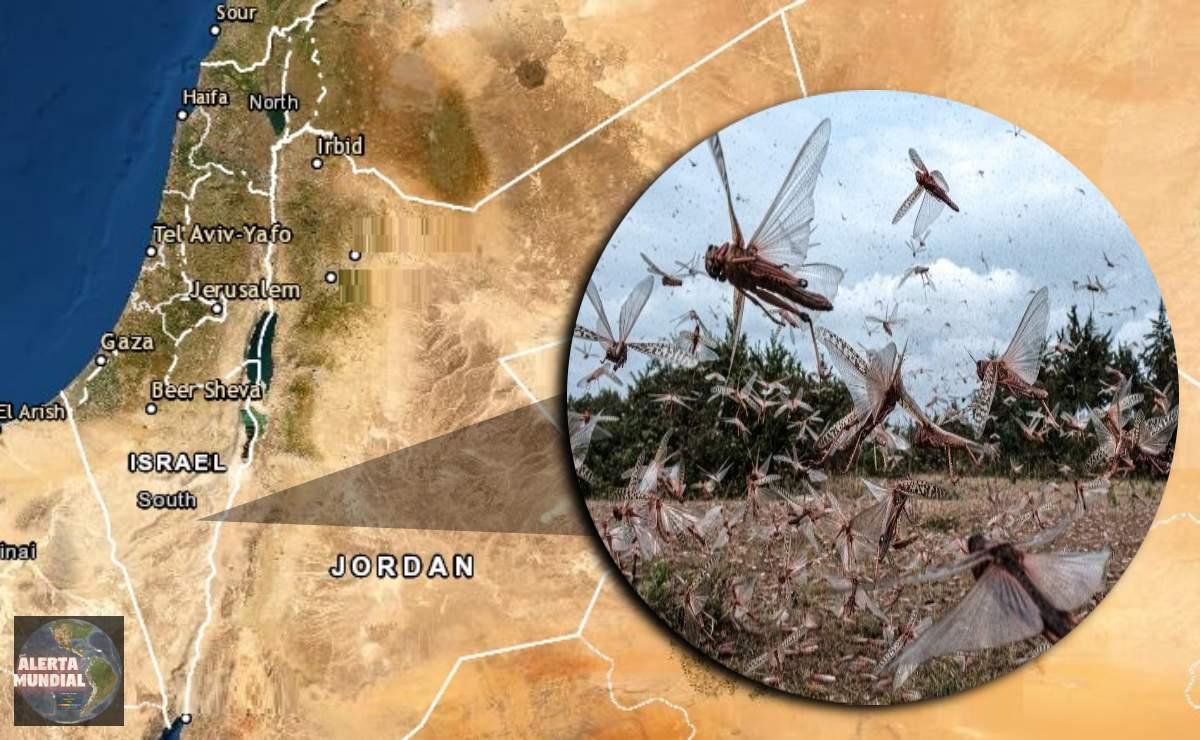 Plaga de langostas golpea a Israel