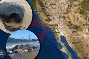 Aparece un raro pez de aguas profundas en California..Después de 8 ballenas muertas ¿Algo por venir